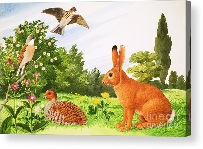 Wildlife Acrylic Print featuring the painting In The Corner Of A Field by John Rignall
