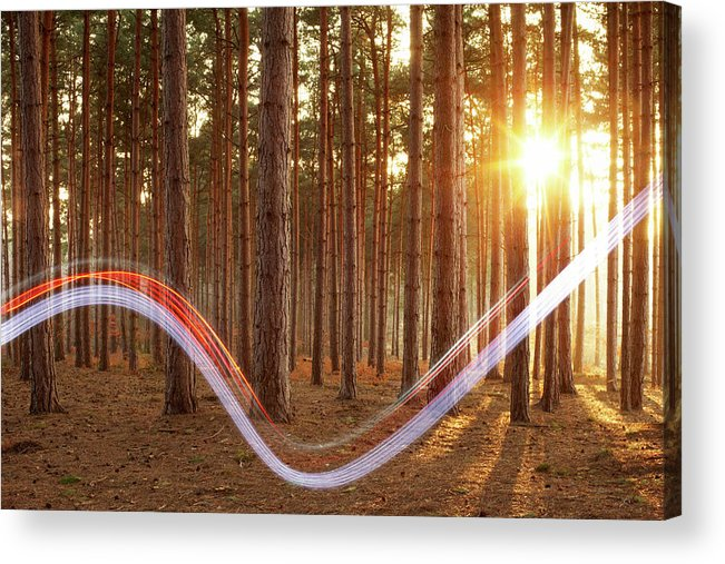 Environmental Conservation Acrylic Print featuring the photograph Light Swoosh In Woods by Tim Robberts