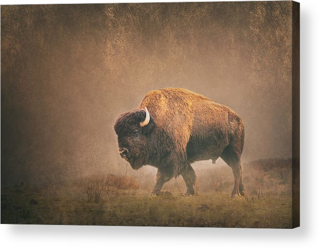 Bison Acrylic Print featuring the photograph Lord Buffalo by Ron McGinnis