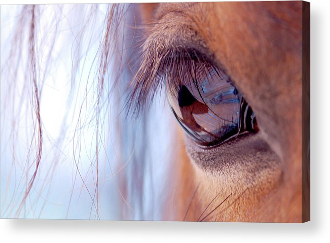 Horse Acrylic Print featuring the photograph Macro Of Horse Eye by Anne Louise Macdonald Of Hug A Horse Farm