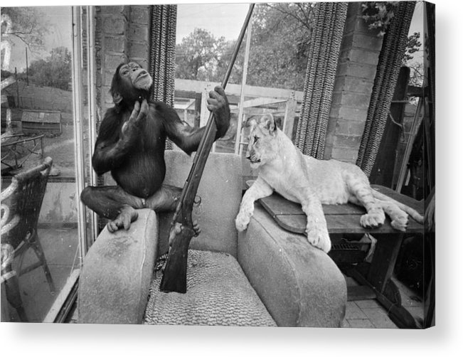 Pets Acrylic Print featuring the photograph Monkeying About by R Dumont