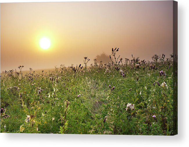Grass Acrylic Print featuring the photograph Morning Dew On Spiders Cobweb by Travelpix Ltd