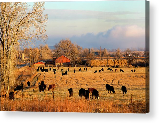 Scenics Acrylic Print featuring the photograph Morning Farm Scene by Beklaus