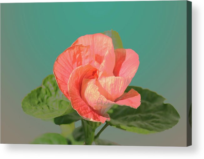 Flower Acrylic Print featuring the digital art Opening by Steve Karol