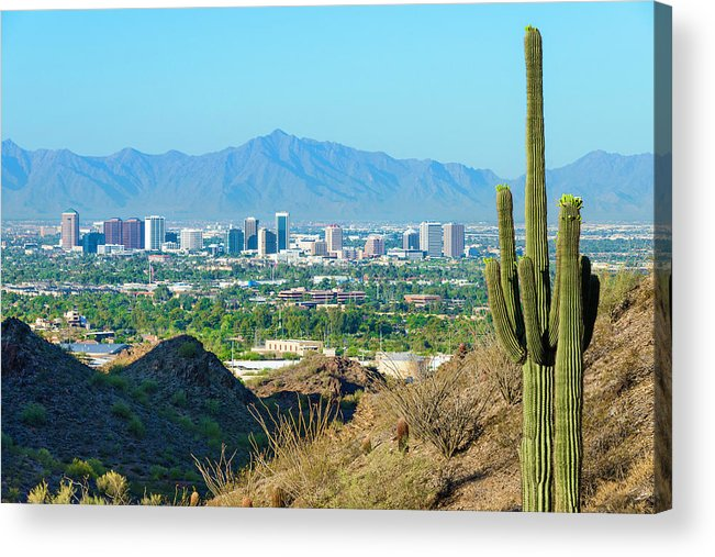 Saguaro Cactus Acrylic Print featuring the photograph Phoenix Skyline Framed By Saguaro by Dszc