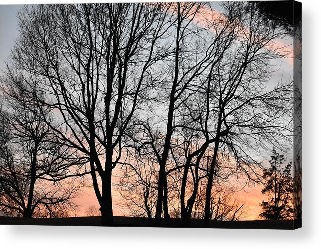 Trees Acrylic Print featuring the photograph Pink Sky by Cassidy Marshall