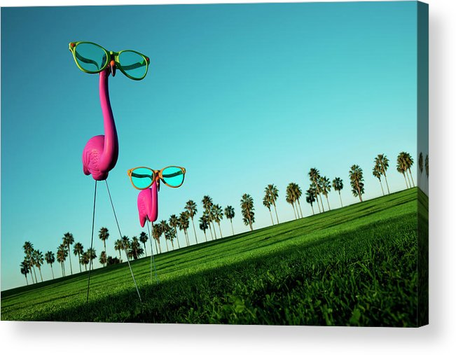 Artificial Acrylic Print featuring the photograph Plastic Pink Flamingos On A Green Lawn by Skodonnell