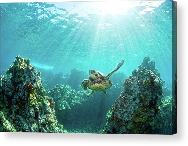 Underwater Acrylic Print featuring the photograph Sea Turtle Coral Reef by M.m. Sweet