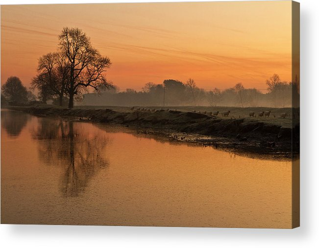 Scenics Acrylic Print featuring the photograph Sheep Sunrise by Paulscreen