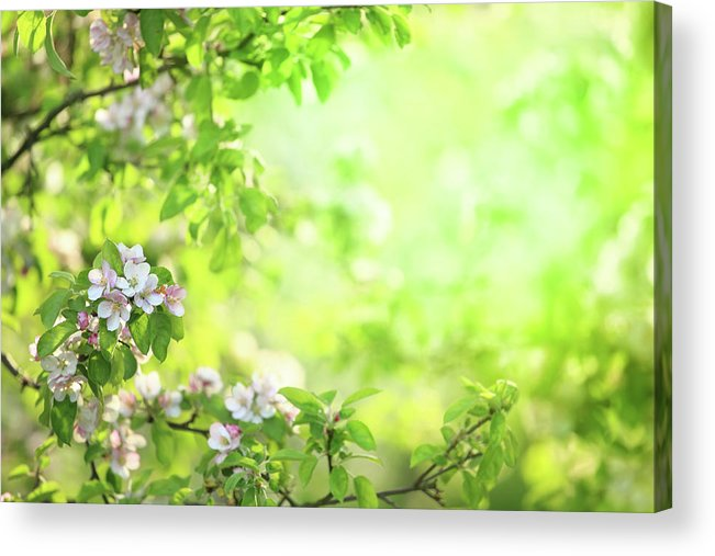 Grass Acrylic Print featuring the photograph Spring Flowers Blooming Orchard - by Konradlew