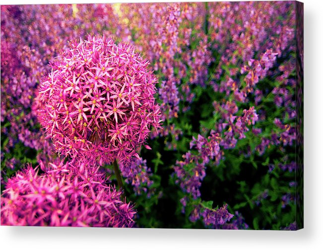 Purple Acrylic Print featuring the photograph Spring Flowers In Garden by Flash Parker