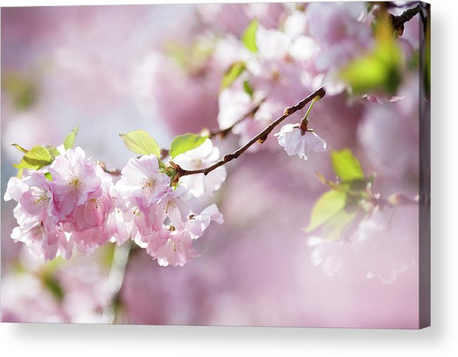 People Acrylic Print featuring the photograph Spring by Goldhafen