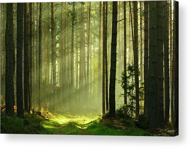 Scenics Acrylic Print featuring the photograph Sunbeams Breaking Through Pine Tree by Avtg