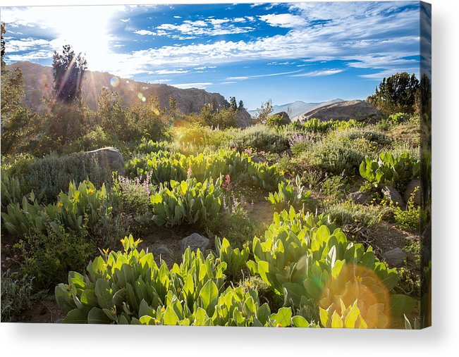 Landscape Acrylic Print featuring the photograph Sunset at Carson Pass by Mark Miller