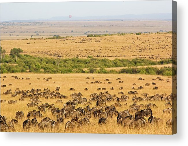 Scenics Acrylic Print featuring the photograph The Masai Mara by Wldavies