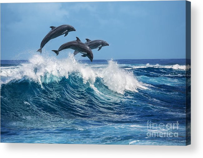 Beauty Acrylic Print featuring the photograph Three Beautiful Dolphins Jumping by Willyam Bradberry