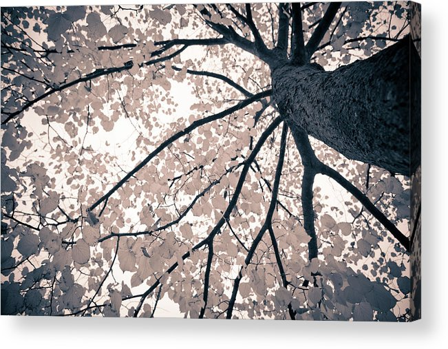 Spray Acrylic Print featuring the photograph Tree Branches by Gianlucabartoli