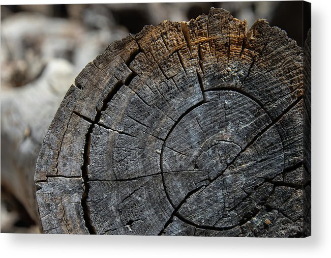 Tree Rings Acrylic Print featuring the photograph Tree Rings by Fred DeSousa