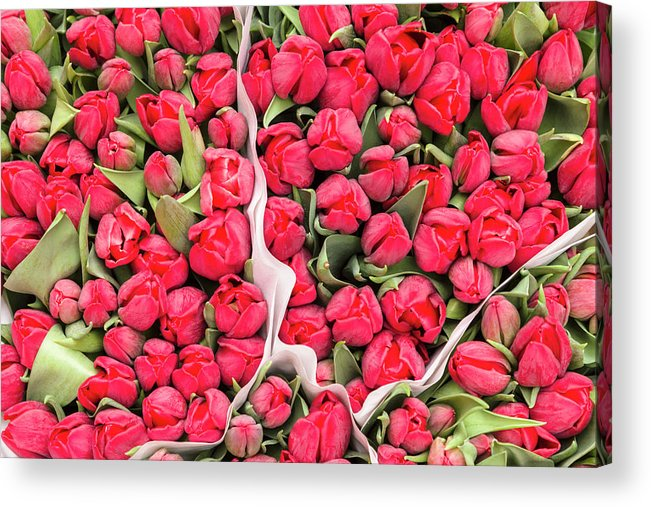 North Holland Acrylic Print featuring the photograph Tulips For Sale At A Flower Market by P A Thompson