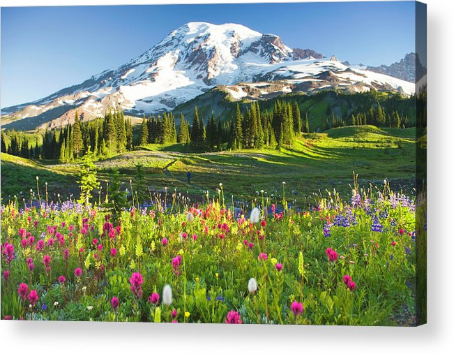 Scenics Acrylic Print featuring the photograph Usa, Washington, Mt. Rainier National by Rene Frederick