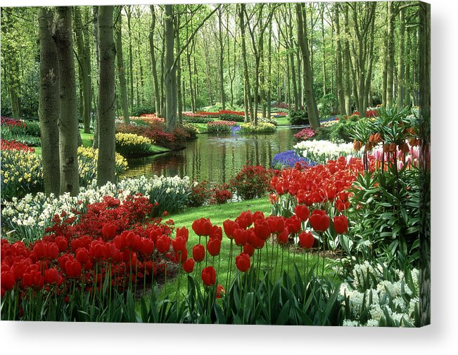 Flowerbed Acrylic Print featuring the photograph Woods And Stream, Keukenhof Gardens by Robin Smith