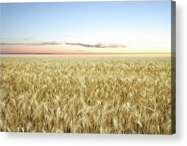 Scenics Acrylic Print featuring the photograph Xxl Wheat Field Twilight by Sharply done