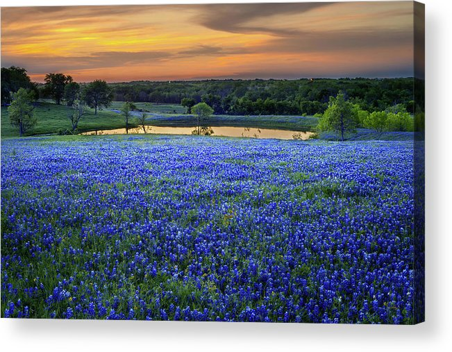 Texas Bluebonnets Acrylic Print featuring the photograph Bluebonnet Lake Vista Texas Sunset - Wildflowers landscape flowers pond by Jon Holiday