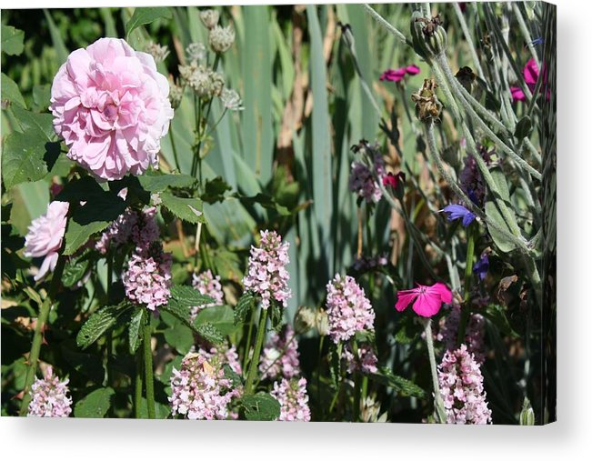 Cottage Garden Acrylic Print featuring the photograph Cottage Garden by Vicki Cridland