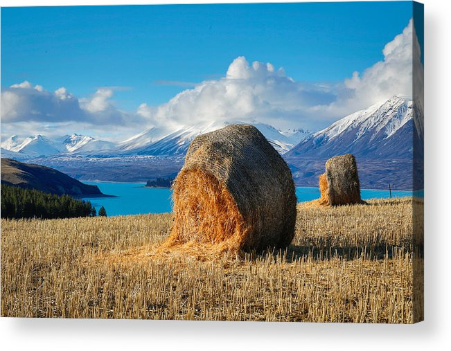 Tekapo Acrylic Print featuring the photograph Lake Tekapo with hay bales and mountain background by Lingxiao Xie