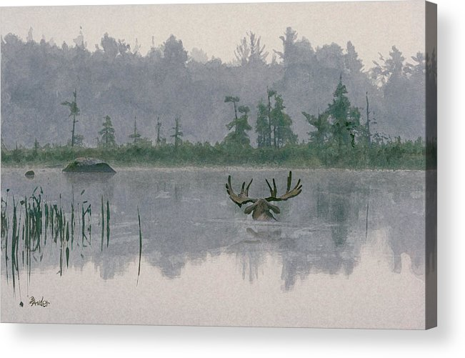 Moose Acrylic Print featuring the painting Moose Crossing by Brent Ander
