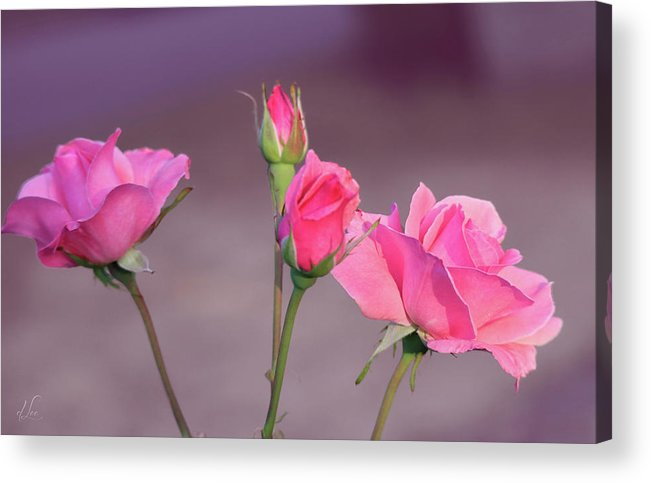 Rose Acrylic Print featuring the photograph Pink Rose Bouquet by D Lee