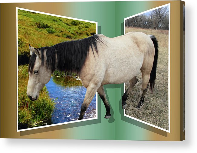 Horse Acrylic Print featuring the photograph The Grass Is Always Greener On The Other Side by Shane Bechler