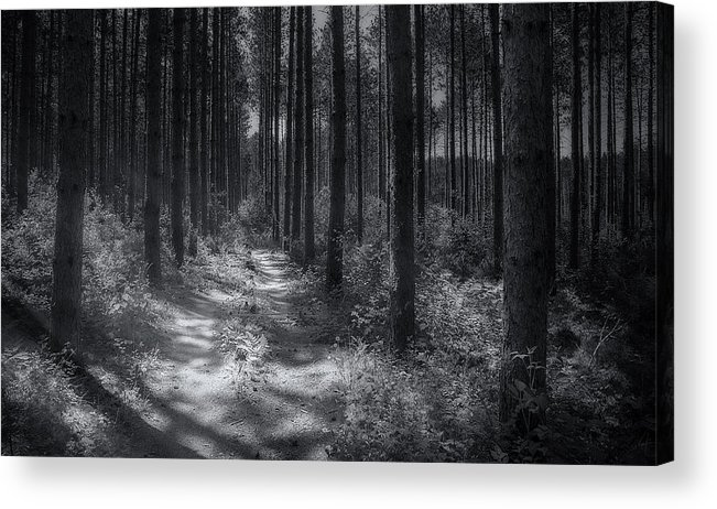 Trees Acrylic Print featuring the photograph Pine Grove by Scott Norris