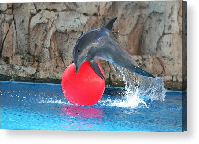 Dolphin Acrylic Print featuring the photograph Play by Diana Gonzalez