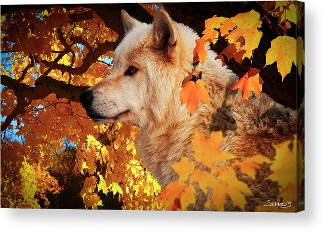 Wolf Acrylic Print featuring the photograph Autumn Leaves And Wolf by Gordon Semmens