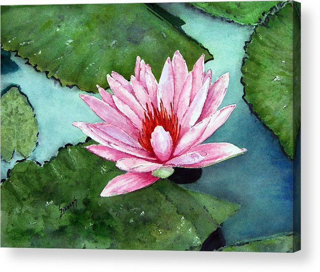 Flower Acrylic Print featuring the painting Another Water Lily by Sam Sidders