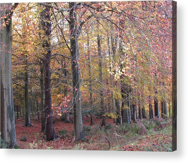 Trees Acrylic Print featuring the photograph Cannock Chase by Joyce Woodhouse