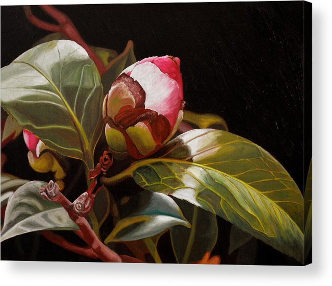 Rose Acrylic Print featuring the painting December Rose by Thu Nguyen