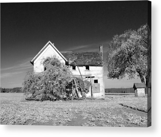 Wisteria Acrylic Print featuring the photograph If I Were A Rich Man by Everett Bowers