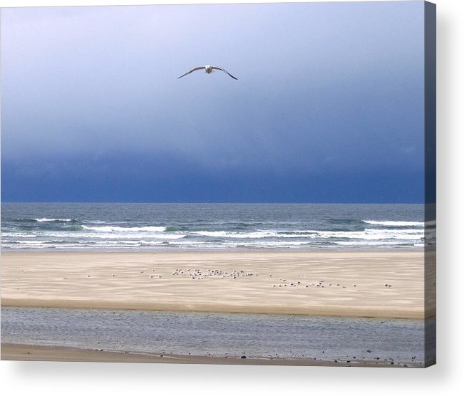 Incoming Seagull Acrylic Print featuring the photograph Incoming Seagull by Will Borden