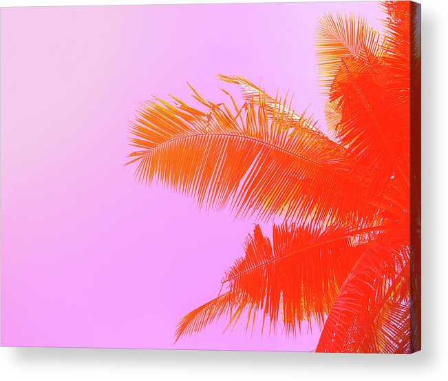 Orange Color Acrylic Print featuring the photograph Palm Tree On Sky Background. Palm Leaf by Slavadubrovin