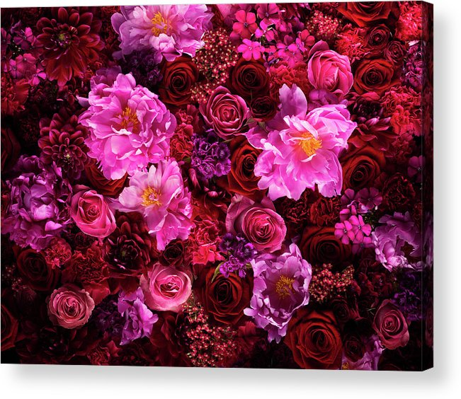 Tranquility Acrylic Print featuring the photograph Red And Pink Cut Flowers, Close Up by Jonathan Knowles