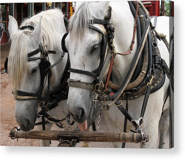 Horses Acrylic Print featuring the photograph This Job Sucks by Paul Anderson