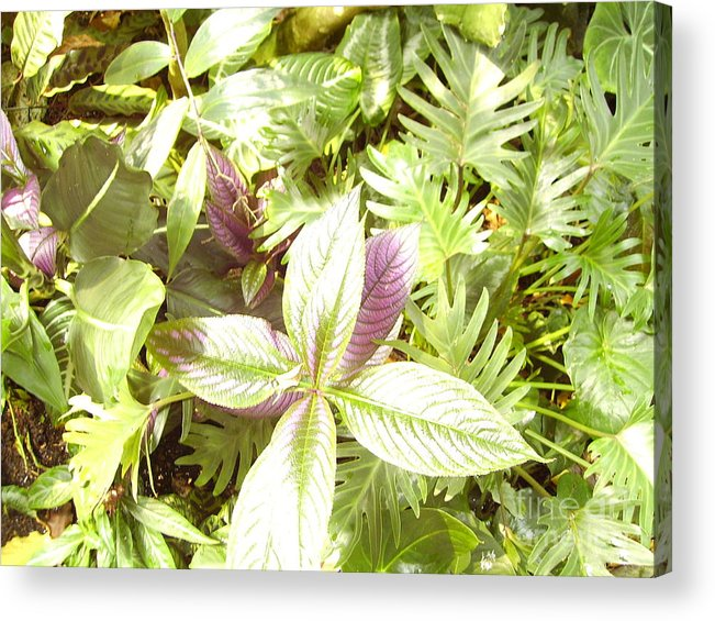 Outdoors Acrylic Print featuring the photograph Tropical by Heather Morris