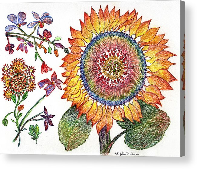 Sunflower Nature Flowers Drawing Julie Richman Acrylic Print featuring the painting Botanical Flower-46 Sunflower Drawing by Julie Richman