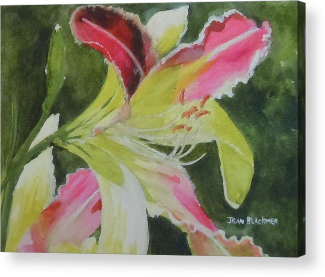 Daylily Acrylic Print featuring the painting Daylily Study 1 by Jean Blackmer
