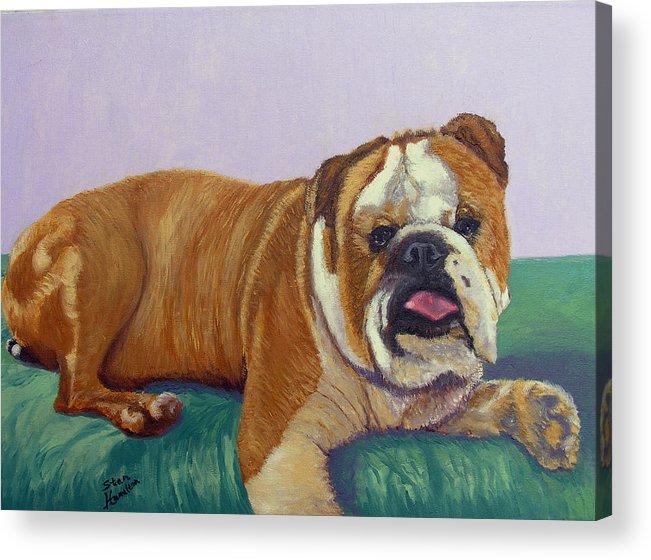 Bull Dog Acrylic Print featuring the painting English Bull Dog by Stan Hamilton