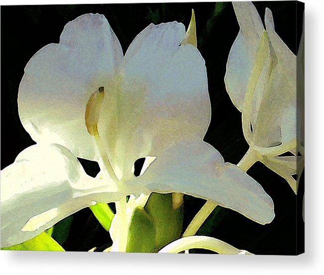 Ginger Acrylic Print featuring the photograph Fragrant White Ginger by James Temple