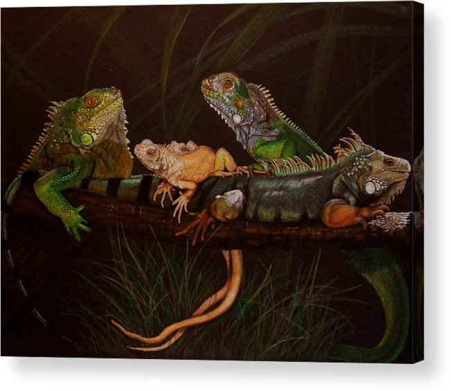 Iguana Acrylic Print featuring the drawing Full House by Barbara Keith
