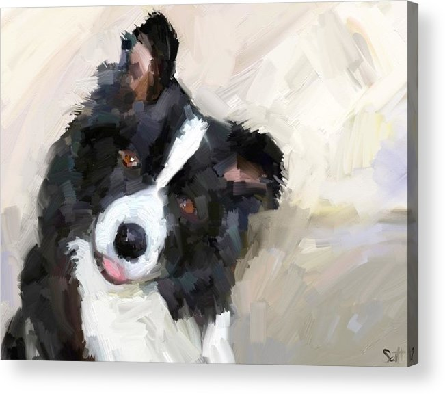 Border Collie Dog Sheepdog Acrylic Print featuring the digital art Got any sheep? by Scott Waters